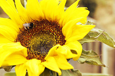 Pollinate Photograph - Busy Bee by Les Cunliffe