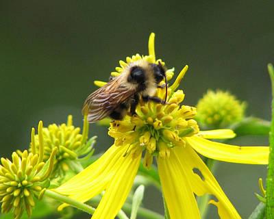 Busy Bee Art Print by Lynn Berney