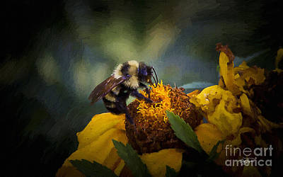 Photograph - Busy Bee Oil by Cris Hayes