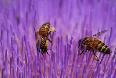 Kelly Jones Photograph - Busy Bees by Kelly Jones
