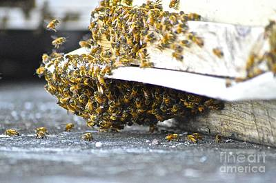 Busy Bees Art Print by Laura Forde