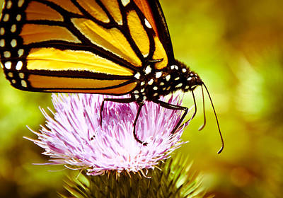Art Print featuring the photograph Busy Butterfly by Cheryl Baxter