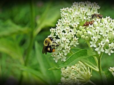 Photograph - Busy Flowers by MTBobbins Photography