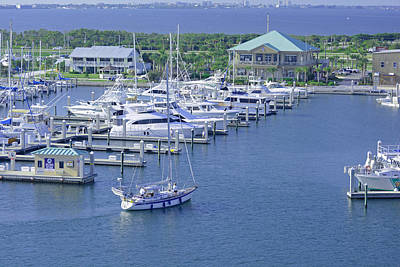 Photograph - Busy Marina by Michael Gooch