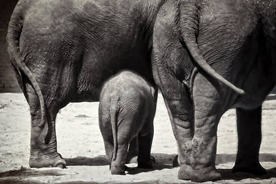 Animals Royalty-Free and Rights-Managed Images - Butt Butt Butt by Joan Carroll