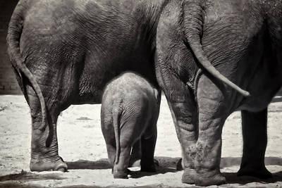 Animals Photos - Butt Butt Butt by Joan Carroll