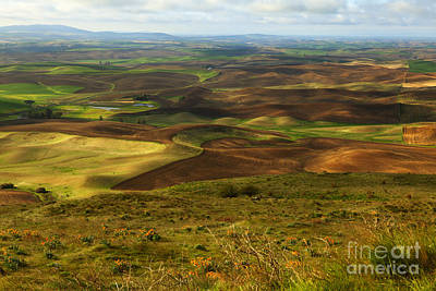 Dappled Light Photograph - Butte With A View by Beve Brown-Clark Photography