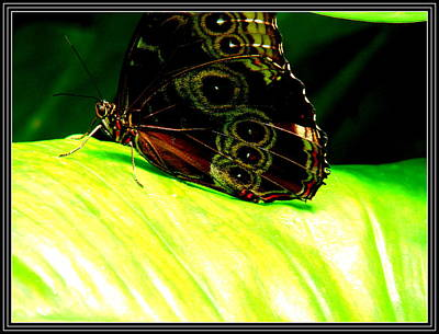 Photograph - Butter Fly-3 by Anand Swaroop Manchiraju