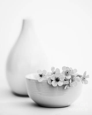 Buttercup Flower Photograph - Buttercup Flowers Still Life In Monochrome by Vishwanath Bhat
