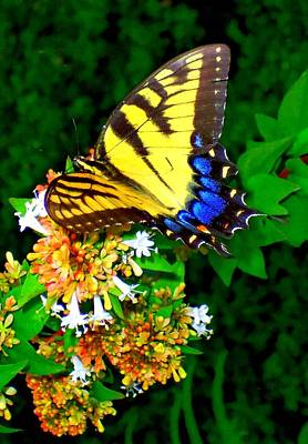 Photograph - Butterflies 5 by Ron Kandt