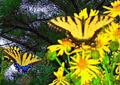 Photograph - Butterflies 6 by Ron Kandt