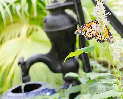 Photograph - Butterflies 7 by Andrea Anderegg