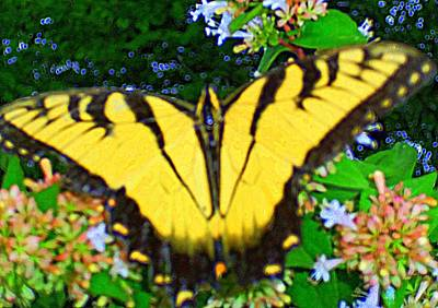 Photograph - Butterflies 9 by Ron Kandt