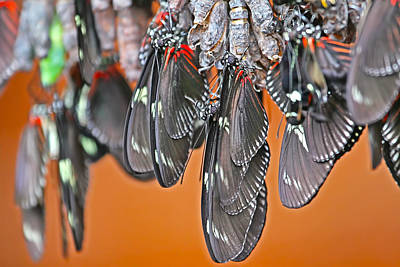 Photograph - Butterflies And Cocoons by Peggy Collins