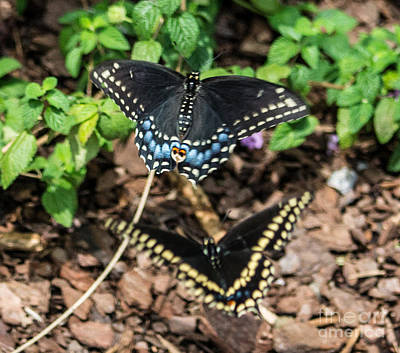 Photograph - Butterflies by Angela DeFrias