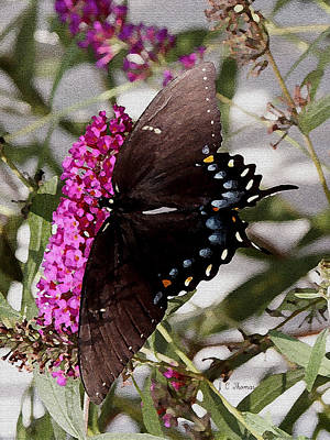 Photograph - Butterflies Are Free by James C Thomas