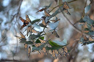 Photograph - Butterflies At Rest by Deprise Brescia