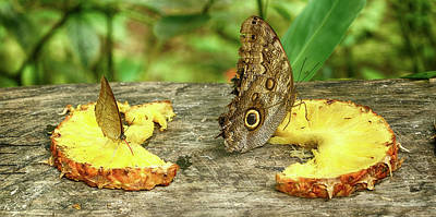 Feeding Photograph - Butterflies Feeding On Pineapple by Panoramic Images