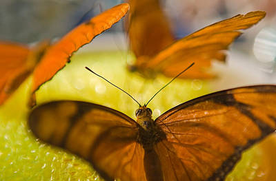 Photograph - Butterflies Feeding by Scott Campbell
