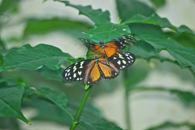 Art Print featuring the photograph Butterflies Gentle Touch by Thomas Woolworth