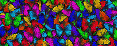 Art Print featuring the photograph Butterflies In Flight Panorama by Kyle Hanson