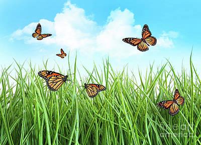 Butterflies In Tall Wet Grass  Art Print by Sandra Cunningham
