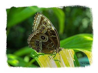 Butterflies Art Print by Joe Oliver
