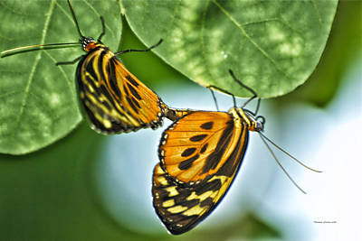Art Print featuring the photograph Butterflies Mating by Thomas Woolworth