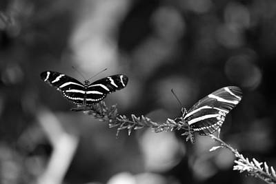 Photograph - Butterflies On A Wire by Rob Hans