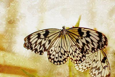 Color Photograph - Butterflies On Lace by Floyd Menezes