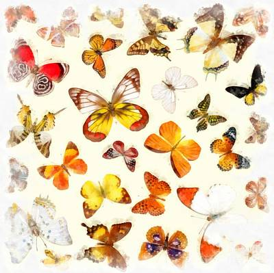 Fluttering Photograph - Butterflies Square by Edward Fielding