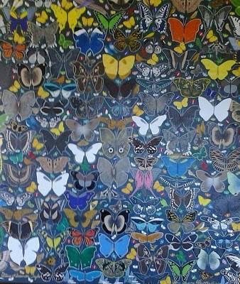 Butterflies Art Print by Steven Taylor