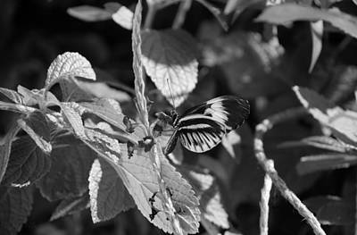 Photograph - Butterfly 1 by Rob Hans