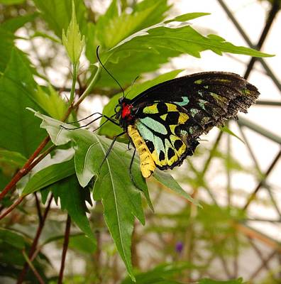 Photograph - Butterfly 1 by Staci Bigelow