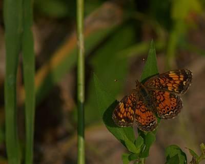 Butterfly 10 Original