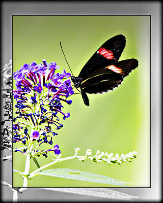 Photograph - Butterfly 11c by Walter Herrit