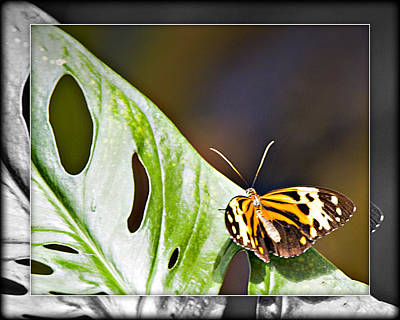 Photograph - Butterfly 12c by Walter Herrit