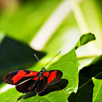 Photograph - Butterfly 19 by Walter Herrit