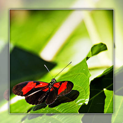Photograph - Butterfly 19b by Walter Herrit