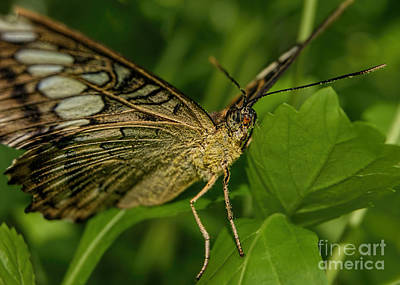 Art Print featuring the photograph Butterfly 2 by Olga Hamilton
