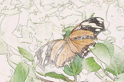 Photograph - Butterfly 2 by Shanna Hyatt