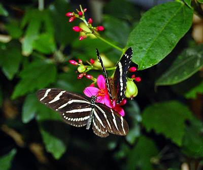 Photograph - Butterfly 2 by Staci Bigelow