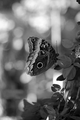 Photograph - Butterfly 3 by Rob Hans