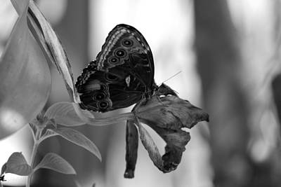 Photograph - Butterfly 4 by Rob Hans