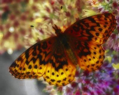 Butterfly 5 Original