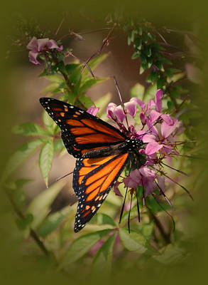 Art Print featuring the photograph Butterfly 5 by Leticia Latocki
