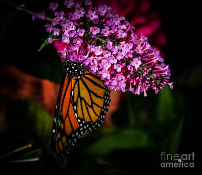 Photograph - Butterfly 5 by Ronald Grogan