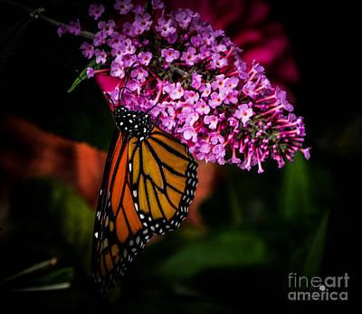 Photograph - Butterfly 5 by Ronald Grogan
