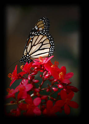 Art Print featuring the photograph Butterfly 6 by Leticia Latocki