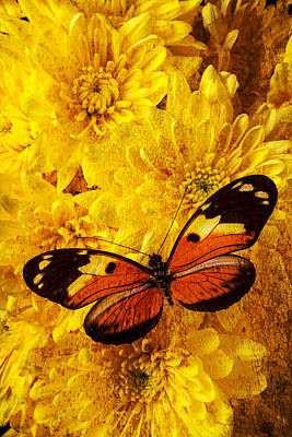 Butterfly Abstract Art Print by Garry Gay